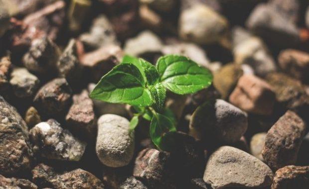 30% p.a. | Die Top 10 Wachstumsaktien 2020 vom ARK Invest ETF